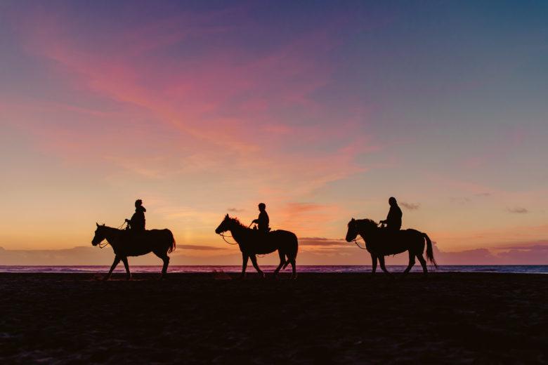 Horses on Ocean Beach in San Francisco